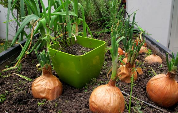 Huerta y herboristería